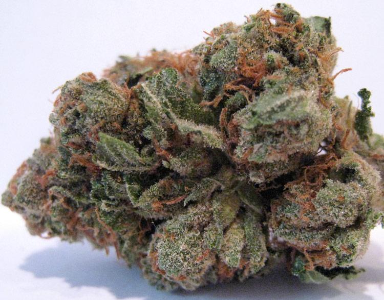 og-kush-marihuana-3
