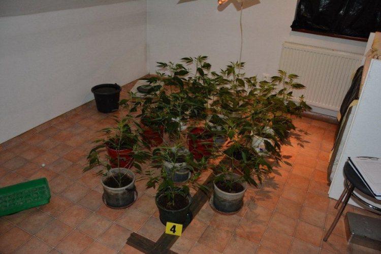 banska-bystrica-policia-marihuana-2