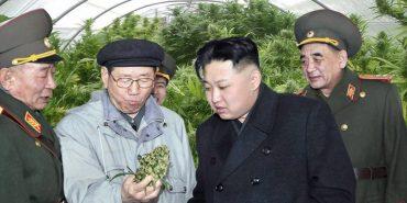 severna-korea-marihuana