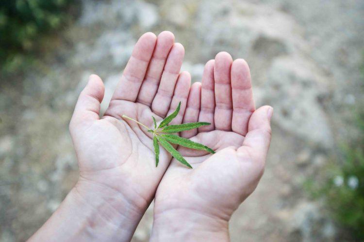 konopny-list-v-rukach