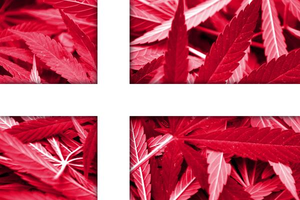 vlajky-marihuana-9